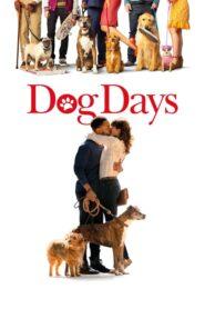 Dog Days lektor pl