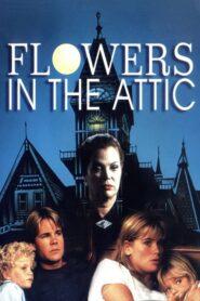 Flowers in the Attic lektor pl