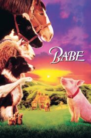 Babe – świnka z klasą lektor pl