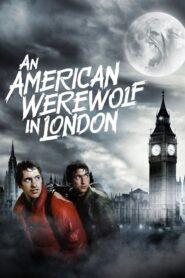 Amerykański wilkołak w Londynie lektor pl