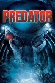 Predator lektor pl
