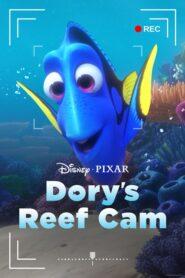 Dory's Reef Cam lektor pl