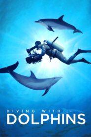 Nurkowanie z delfinami lektor pl